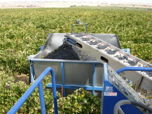 Brady Vineyard Winemaking Process
